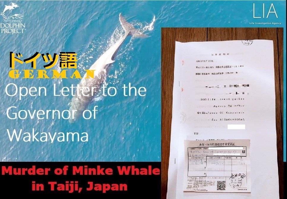 GERMAN: Mord an Zwergwal in Taiji: Offener Brief an den Gouverneur von Wakayama