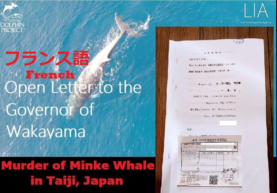 FRENCH: Meurtre du petit rorqual à Taiji: lettre ouverte au gouverneur de Wakayama
