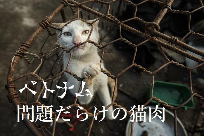 ベトナム 問題だらけの猫肉ビジネス