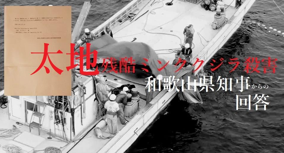 LIAとPCA連名「混獲ミンククジラ屠殺」に関しての公開質問状に対する和歌山県からの回答を公開いたします