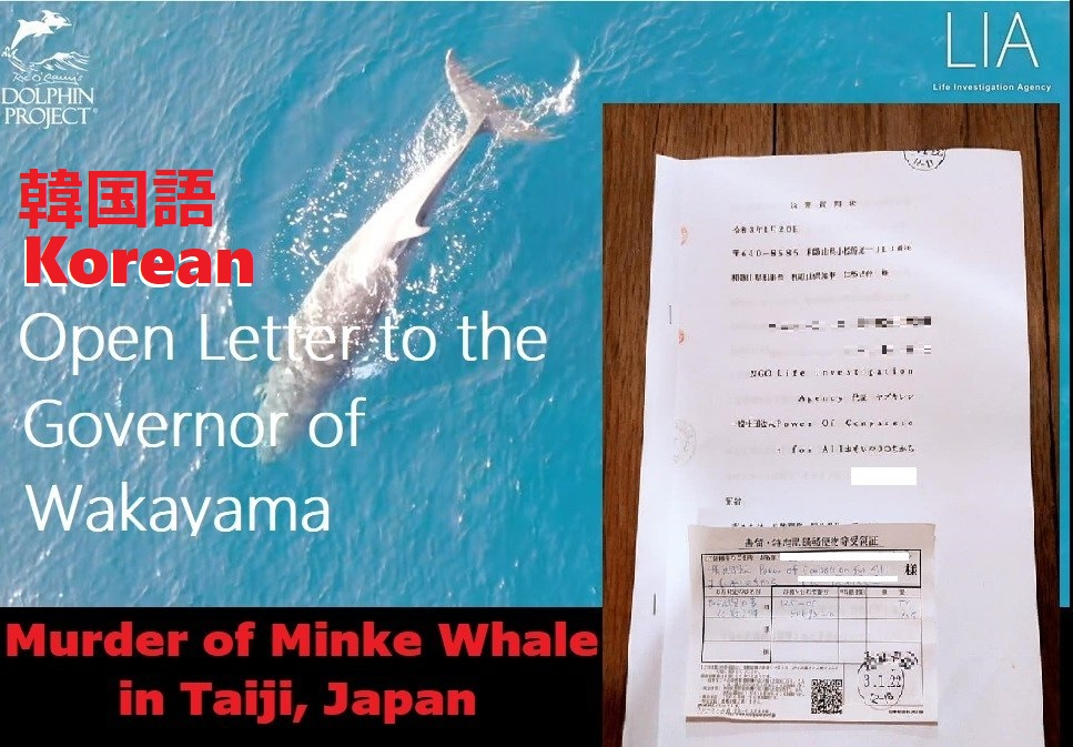 KOREAN:<혼획 밍크고래의 도살>에 대한 공개 질문장에 대한 와카야마현 농림수산국자원관리의 회신을 공개합니다