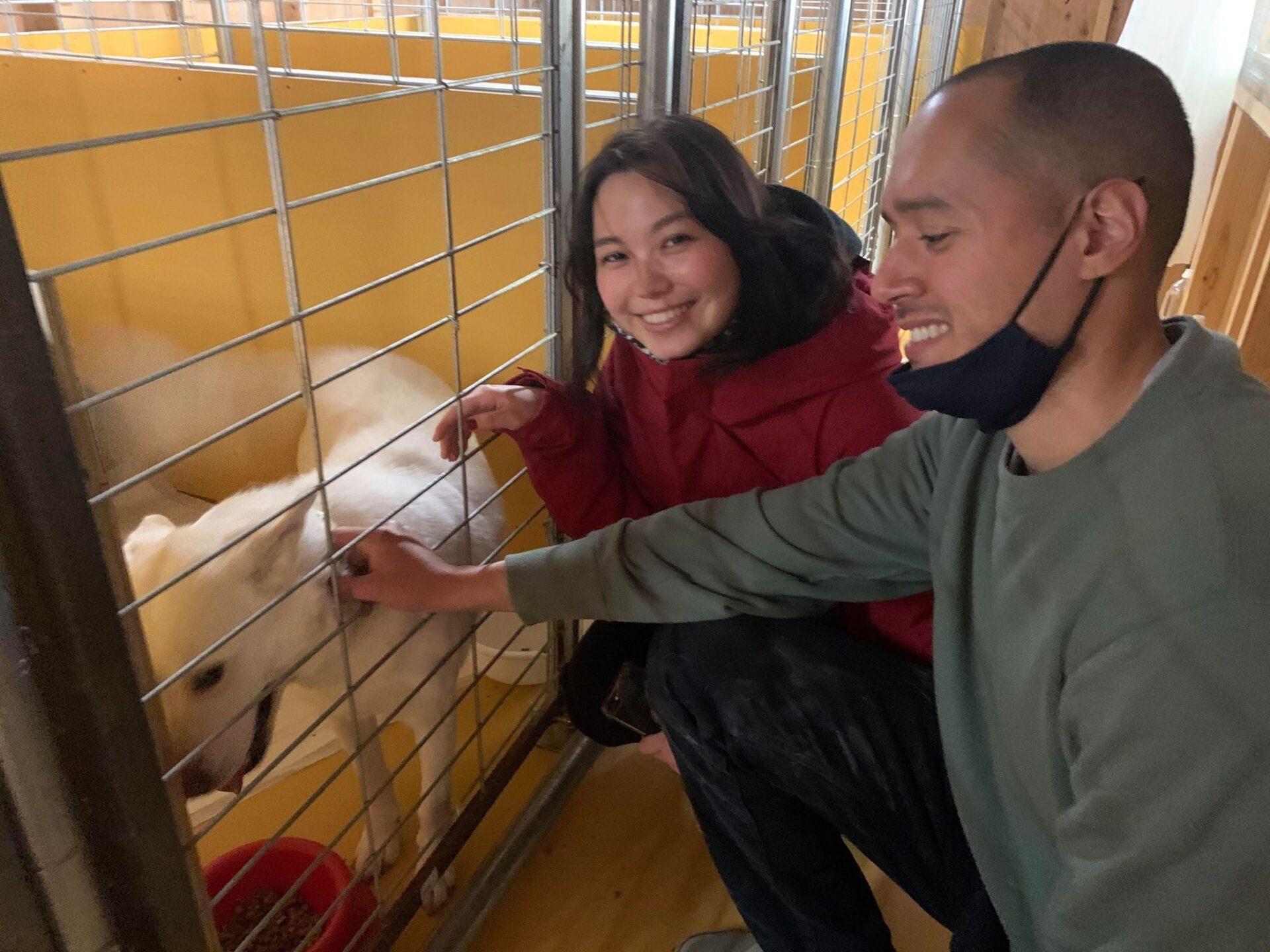 日本に来た韓国犬肉保護犬 トライアルが始まる‼