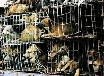 2021年ユーリン犬肉祭りはあるか?行政が新たな規制を設け、祭り開催はさらに厳しく